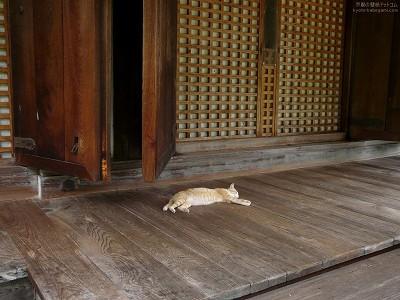 浄瑠璃寺27【ダウンロードする場合は右の画像サイズをクリックしてください】