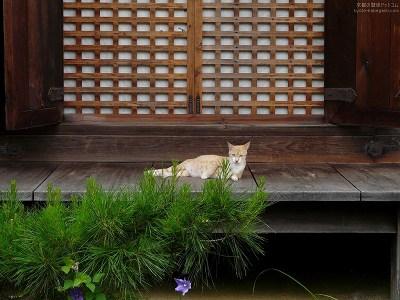 浄瑠璃寺29【ダウンロードする場合は右の画像サイズをクリックしてください】