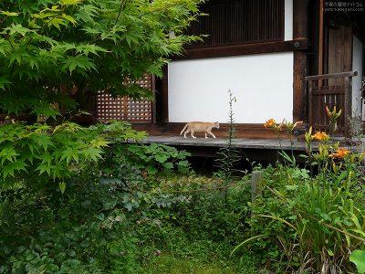 浄瑠璃寺30【ダウンロードする場合は右の画像サイズをクリックしてください】