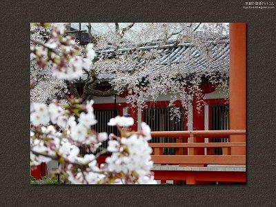 道成寺12【ダウンロードする場合は右の画像サイズをクリックしてください】