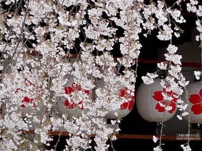 平野神社05【ダウンロードする場合は右の画像サイズをクリックしてください】