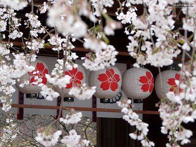 平野神社06【ダウンロードする場合は右の画像サイズをクリックしてください】
